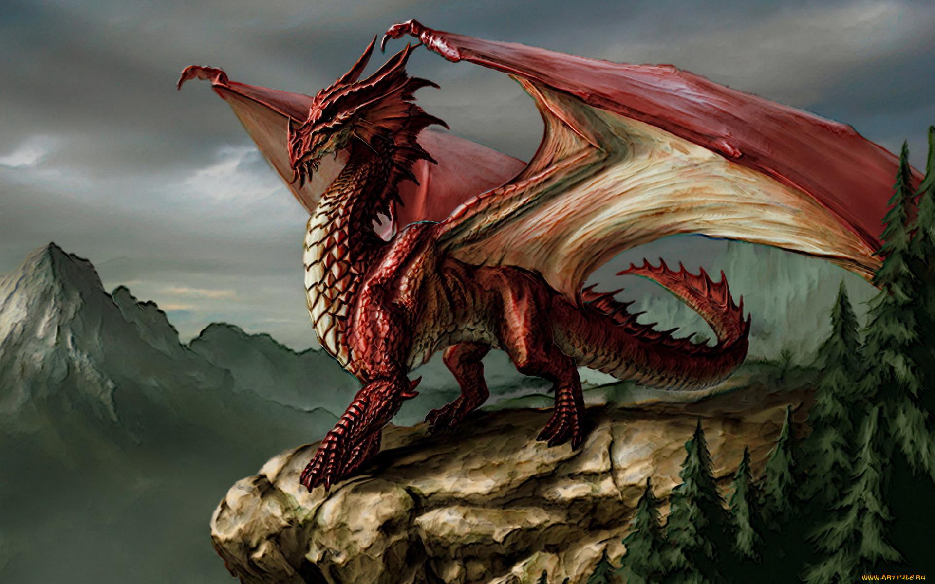 картинки фэнтази дракон вручается